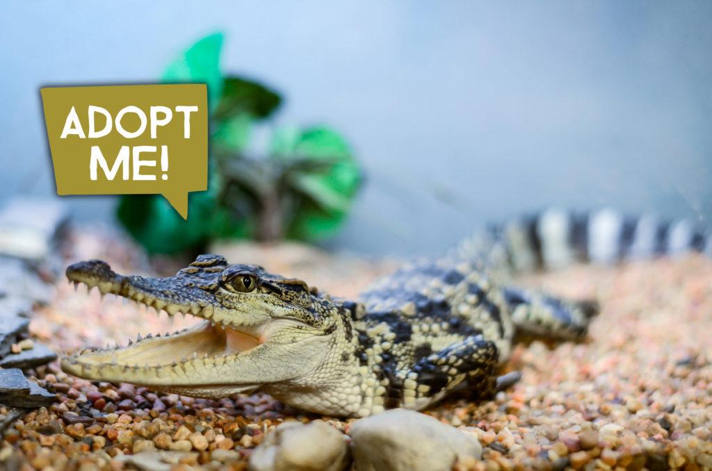 Adopt An Animal Animal World And Snake Farm
