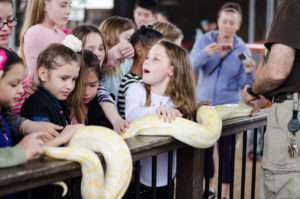 Burmese Python Snake Animal World & Snake Farm Zoo Children Kids