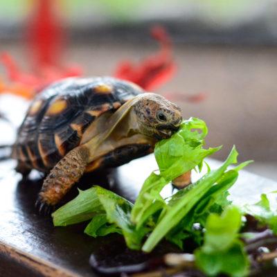 Adopt an Animal - Animal World and Snake Farm