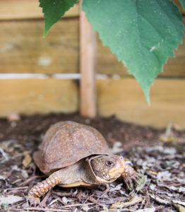 The turtles are coming! - Animal World and Snake Farm
