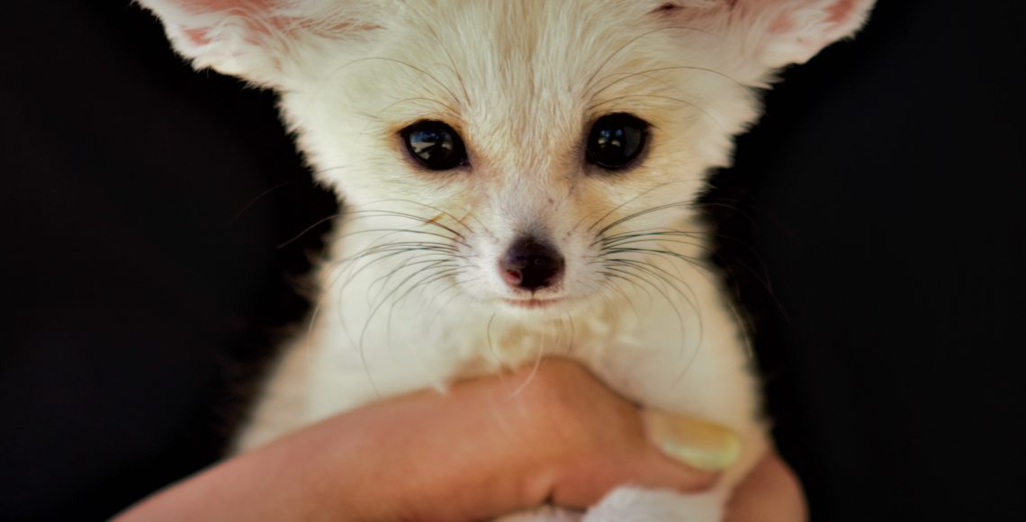 fennec fox animal world and snake farm