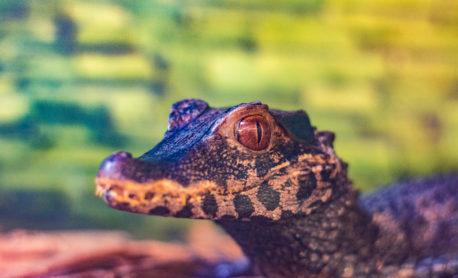 Welcome Back to Animal World & Snake Farm Zoo!