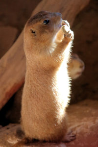 Cute Prairie Dog Animal World and Snake Farm Zoo