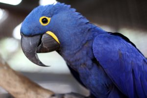 Hyacinth Macaw Winter Animal World and Snake Farm Zoo